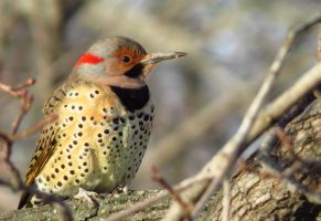 Sunlit Flicker by Synari