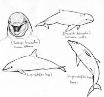 Dolphin sketches 2 by amorousdino