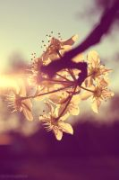 Into The Sun. by leannlaughlove