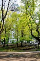 Central Park Stock 93 by FairieGoodMother