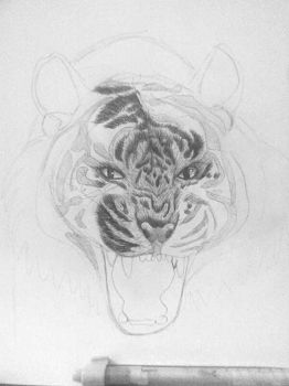 Tiger portrait - Pencil by Daisymadness