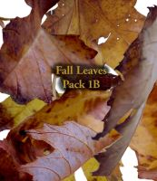 Fall Leaves pack 1B by Treeclimber-Stock