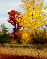 Shades of Autumn XVIII by MadGardens