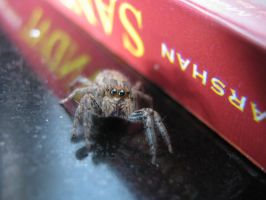 Cute spider in my kitchen by TacDrol