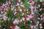Tiny Pink Flowers by etiennia