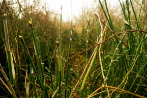 RiverReeds001 by CityWavePhotography