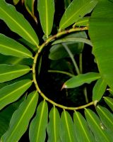 Circle Fern by AquarianPhotography