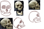I Like Drawing Skulls by Aesop-Epics