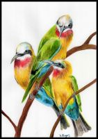 Bee Eaters by Helenr251