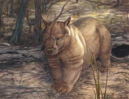 Hairy-nosed Wombat by Seaff