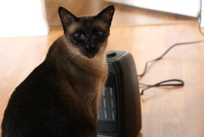 Zeus likes to block the space heater by Theinkcat