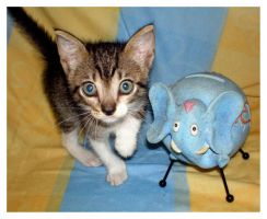 Kitty and Elephant by JacquiJax