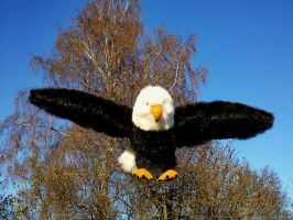 proud eagle by anna142