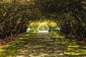 Dallas Arboretum Dallas,TX by Broken-Weasel