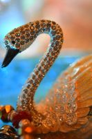 Swan by SharPhotography