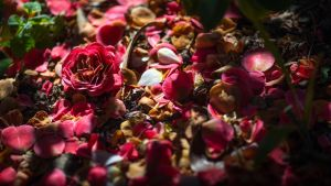 Nawak Ground Flowers Wallpaper by Pierre-Lagarde
