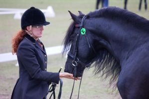 STOCK - Friesian Show 2012-128 by fillyrox