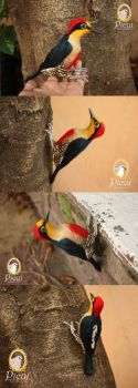 Yellow-Fronted Woodpecker (Melanerpes flavifrons) by PicuiDove