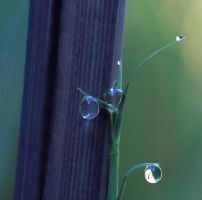 Bamboo Drops by jbrum