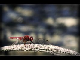 Dragonfly by ValdesBG
