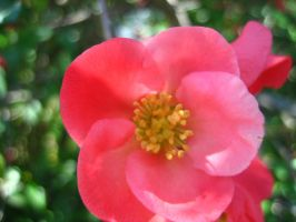 Pink Flower 3 by Holly6669666