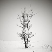 CCCII. ..Hiver V. by behherit