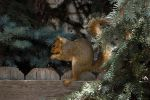 fairytale-how to squirrel bread proverb-serial 5 by sonafoitova