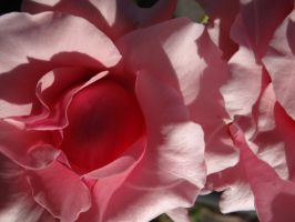Plethora of Pink by Whimseystock