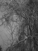 bunch od branches by brokenphoto