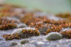 Mossy 4 by Very-Free-Stock