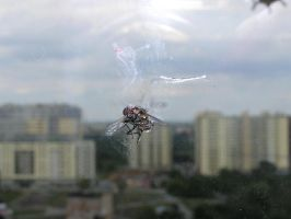 dead fly 02 by Caltha-stock