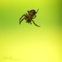 free fall by Aimelle
