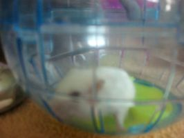 RIP Snowball I love you xxx by Kandyfloss30a