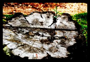 Tree Stump by VannaCreations09