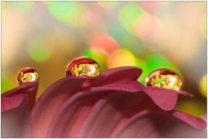 Petal Drops 01 by jonboy56