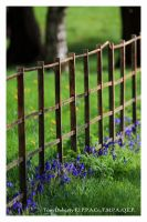 Along the fence by PicTd