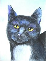 Ravenpaw by x----eLLiE----x
