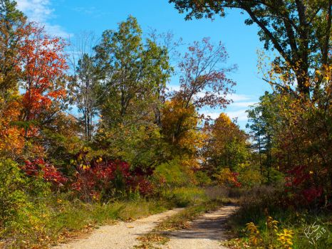 Autumnal Path by consine