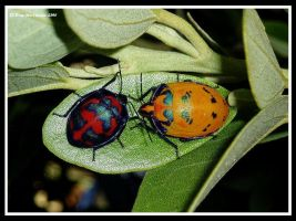 Cotten Harlequin Bugs by BreeSpawn