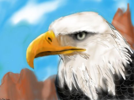 Bald eagle by Osman55