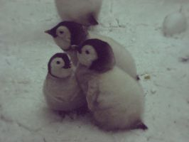 children of penguin by Northern-beauty