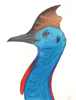 SILIGHTLY OLD -Cassowary by Thylacine333