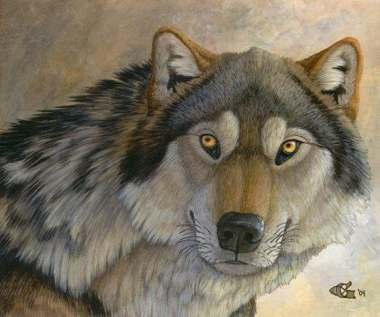 Canis dirus by Goldenwolf