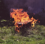 burning of the tree stump by AlexDanni