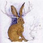 Jackalope Colored by alpisces