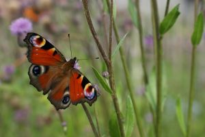butterfly 3 by Woolpix