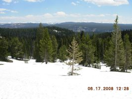 Snowy Yellowstone Forest by KayJay777