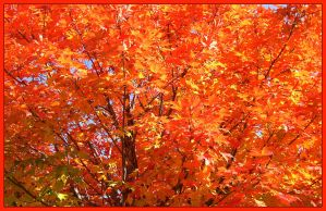 trees and leaves 01 by hamdiggy