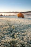 Frosty Path by Stridsberg