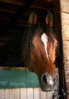 Soloman's beauty shot by TlCphotography730